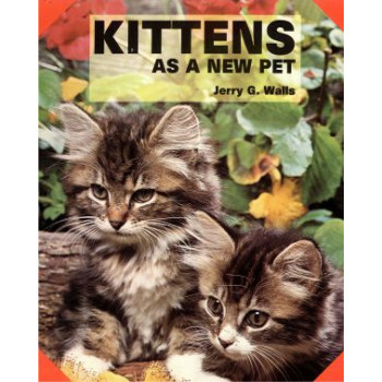 KITTENS AS A NEW PET