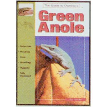 ANOLES, GREEN