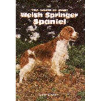 SPRINGER SPANIEL-WELSH