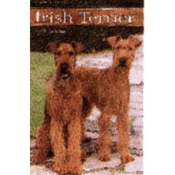 TERRIER, IRISH